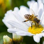Tips om je tuin aantrekkelijker te maken voor bijen