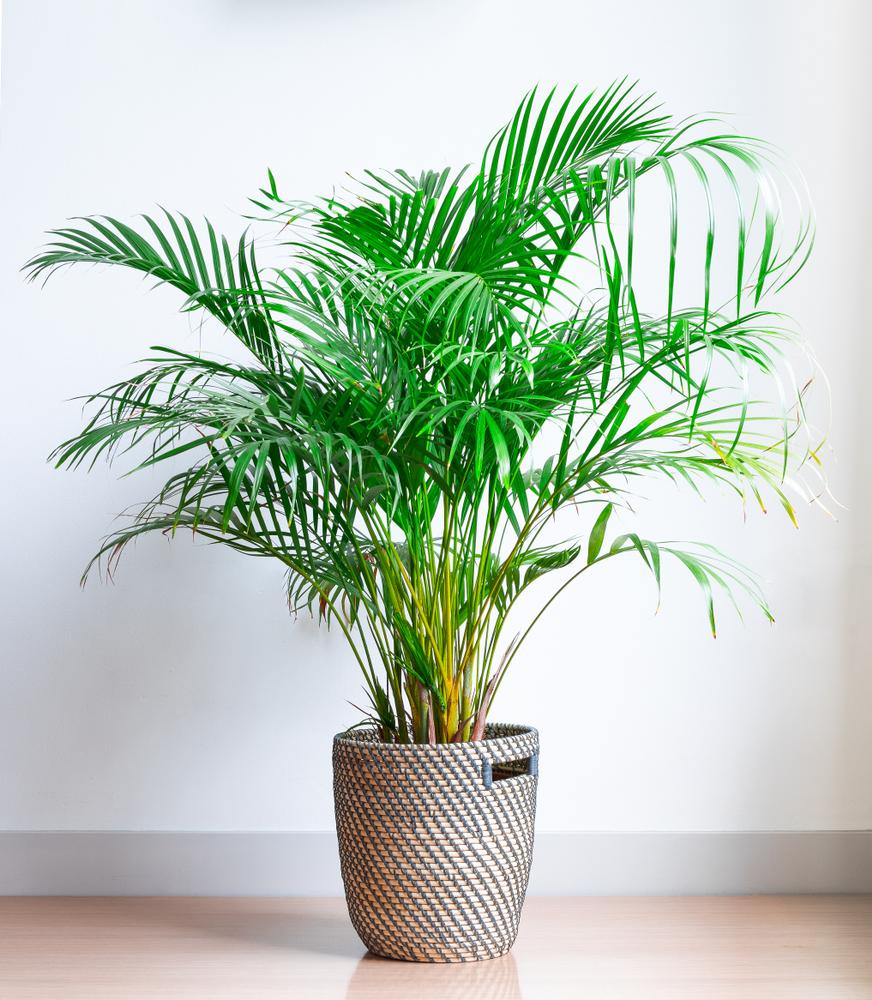 deze kamerplanten zuiveren de lucht in je huis viadomo. Black Bedroom Furniture Sets. Home Design Ideas