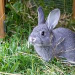 Pas op voor madenziekte bij je konijn door de hitte