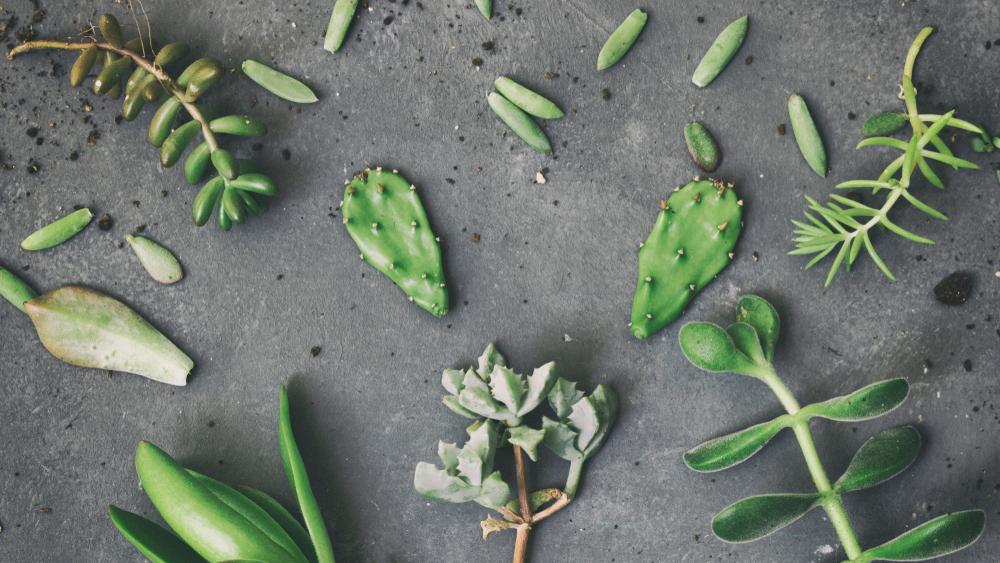 vetplant stekken