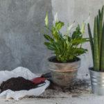 Deze kamerplanten zuiveren de lucht in je huis